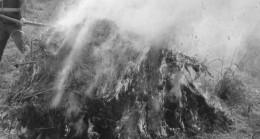 Babaeski'de 120 bin Kök Hint Keneviri İmha Edildi