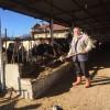 """""""Ulusal Süt Konseyi'nin ve süt sanayicimizin üreticimizi kollaması koruması lazımdır"""""""